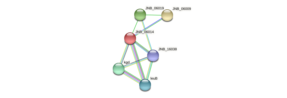 JNB_06014 protein (Janibacter sp. HTCC2649) - STRING interaction network