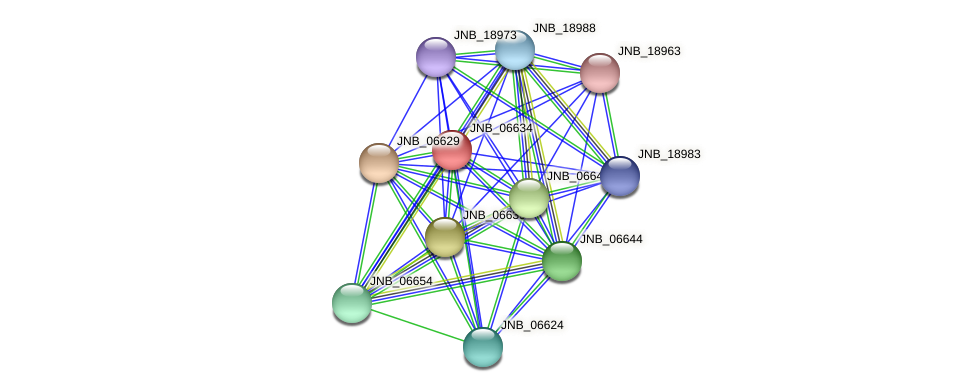 JNB_06634 protein (Janibacter sp. HTCC2649) - STRING interaction network