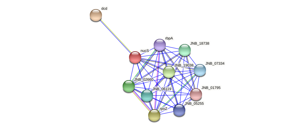 nucS protein (Janibacter sp. HTCC2649) - STRING interaction network