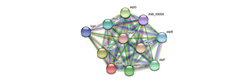 atpA protein (Janibacter sp. HTCC2649) - STRING interaction network