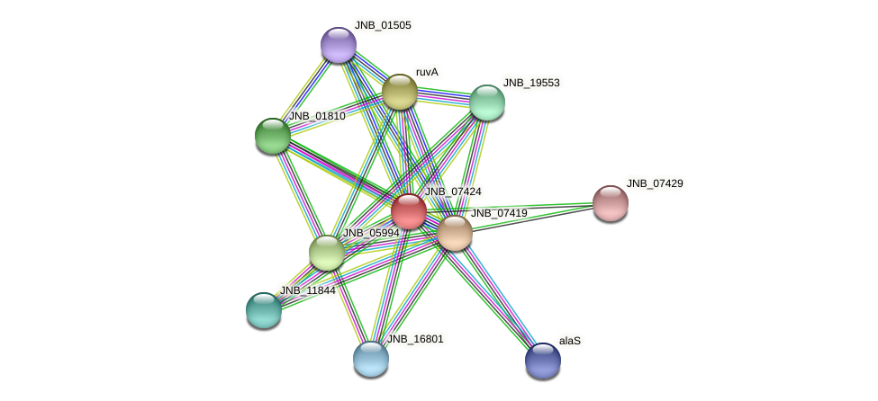 JNB_07424 protein (Janibacter sp. HTCC2649) - STRING interaction network