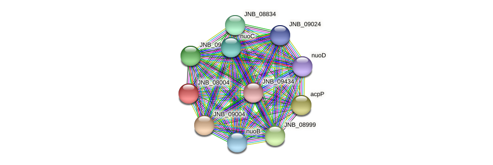 JNB_08004 protein (Janibacter sp. HTCC2649) - STRING interaction network