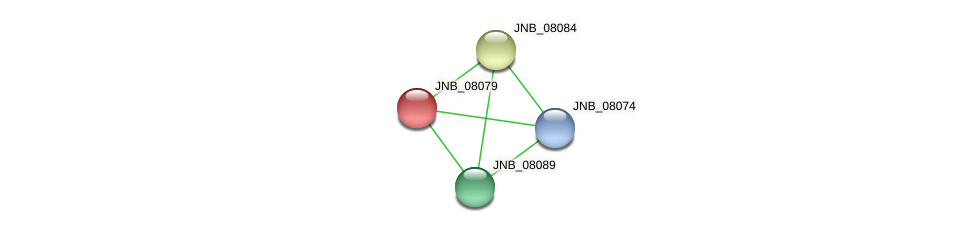 JNB_08079 protein (Janibacter sp. HTCC2649) - STRING interaction network