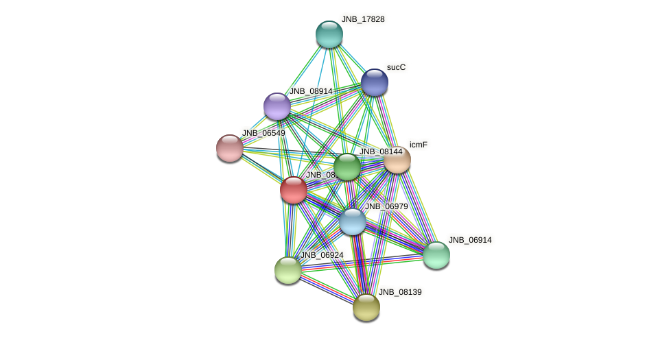 JNB_08149 protein (Janibacter sp. HTCC2649) - STRING interaction network