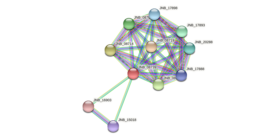 JNB_08739 protein (Janibacter sp. HTCC2649) - STRING interaction network