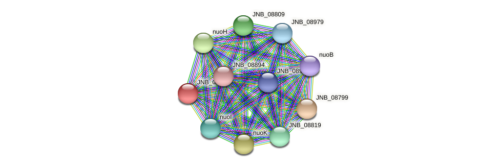 JNB_08804 protein (Janibacter sp. HTCC2649) - STRING interaction network