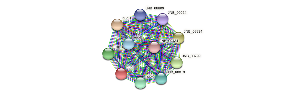 JNB_08824 protein (Janibacter sp. HTCC2649) - STRING interaction network