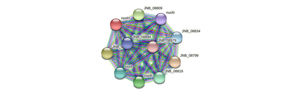 JNB_08829 protein (Janibacter sp. HTCC2649) - STRING interaction network
