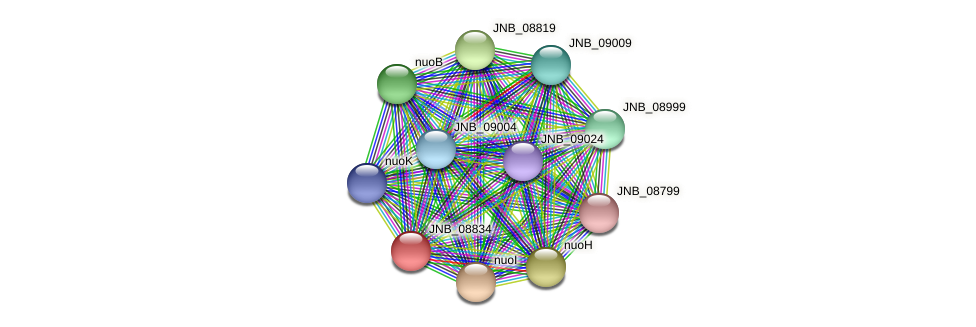 JNB_08834 protein (Janibacter sp. HTCC2649) - STRING interaction network