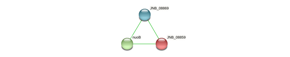 JNB_08859 protein (Janibacter sp. HTCC2649) - STRING interaction network