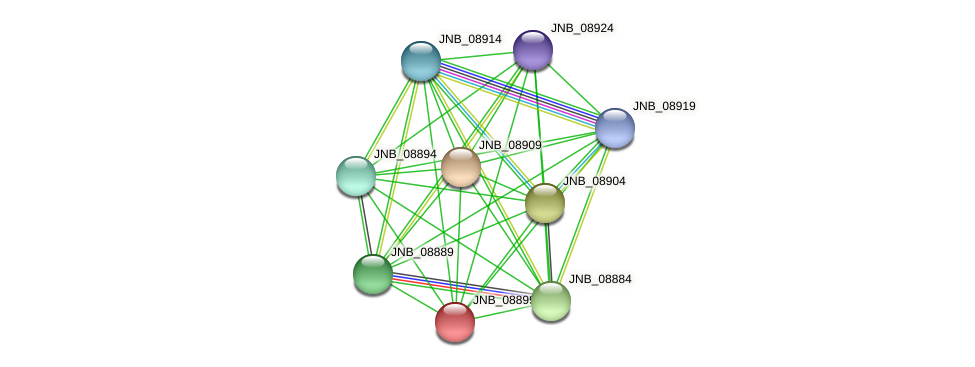 JNB_08899 protein (Janibacter sp. HTCC2649) - STRING interaction network