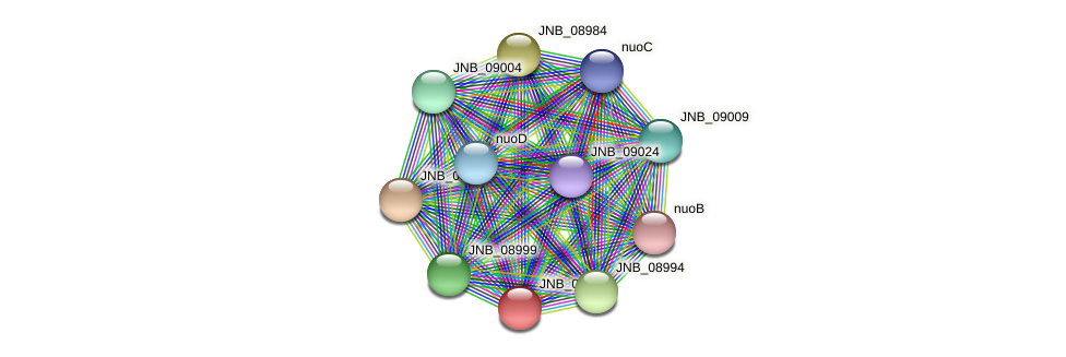 JNB_08989 protein (Janibacter sp. HTCC2649) - STRING interaction network