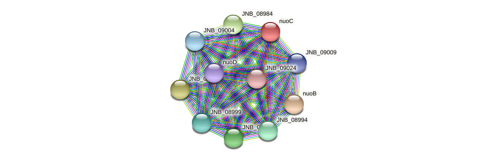 nuoC protein (Janibacter sp. HTCC2649) - STRING interaction network
