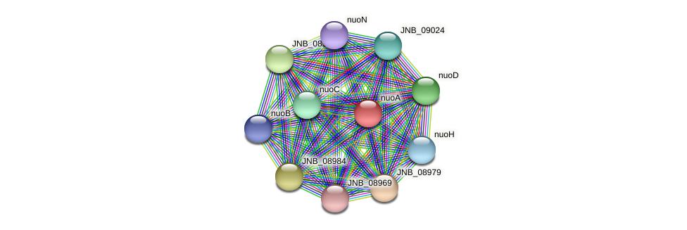 nuoA protein (Janibacter sp. HTCC2649) - STRING interaction network