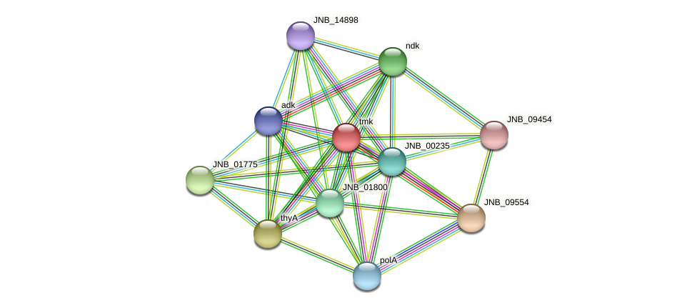 tmk protein (Janibacter sp. HTCC2649) - STRING interaction network