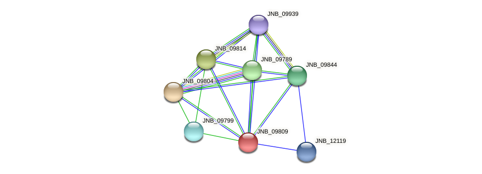 JNB_09809 protein (Janibacter sp. HTCC2649) - STRING interaction network