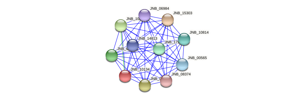 JNB_10134 protein (Janibacter sp. HTCC2649) - STRING interaction network
