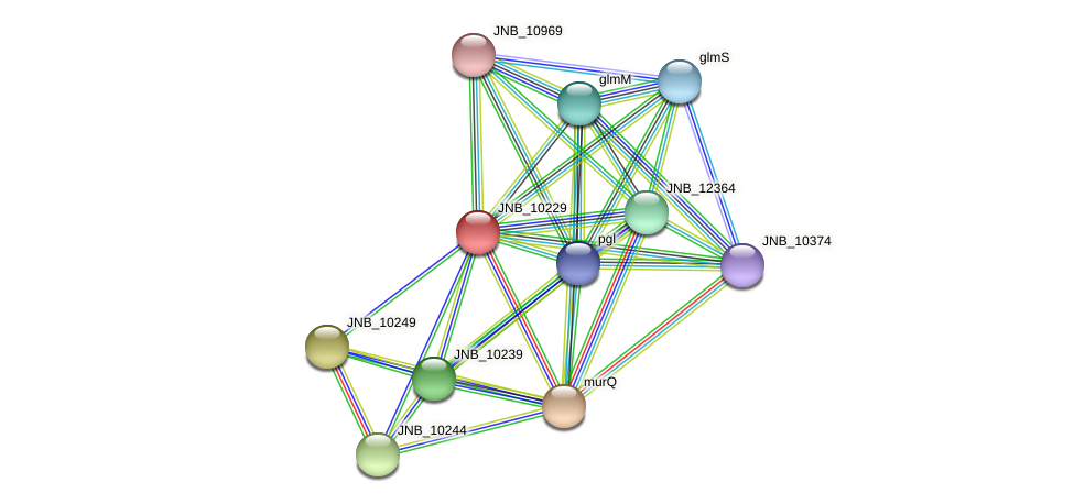 JNB_10229 protein (Janibacter sp. HTCC2649) - STRING interaction network