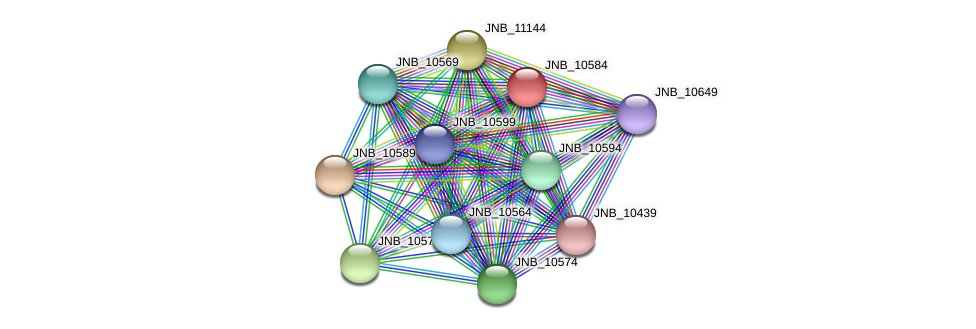 JNB_10584 protein (Janibacter sp. HTCC2649) - STRING interaction network