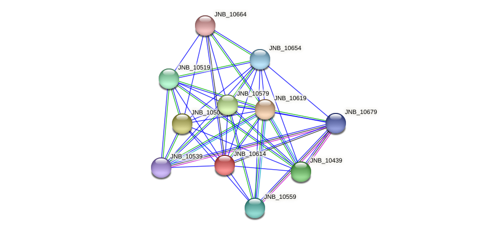 JNB_10614 protein (Janibacter sp. HTCC2649) - STRING interaction network