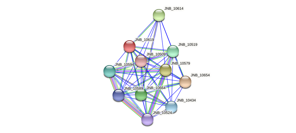 JNB_10619 protein (Janibacter sp. HTCC2649) - STRING interaction network