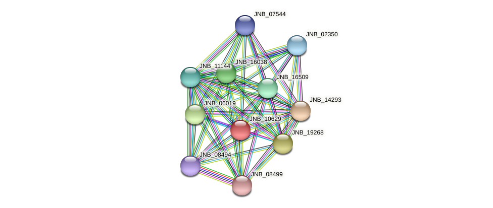 JNB_10629 protein (Janibacter sp. HTCC2649) - STRING interaction network