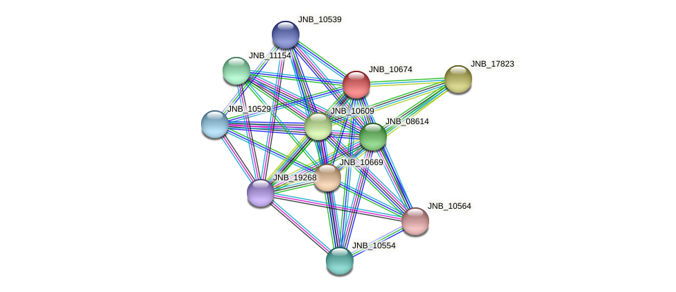 JNB_10674 protein (Janibacter sp. HTCC2649) - STRING interaction network
