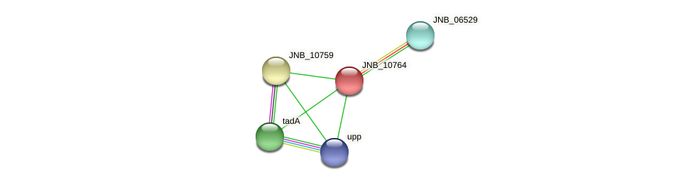 JNB_10764 protein (Janibacter sp. HTCC2649) - STRING interaction network
