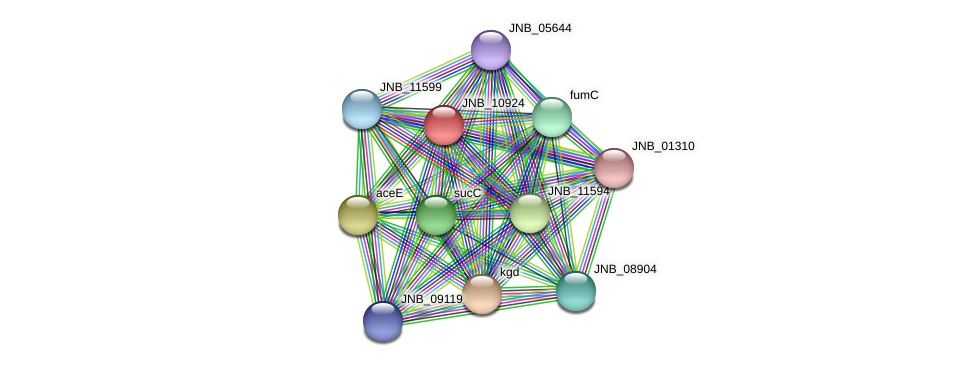 JNB_10924 protein (Janibacter sp. HTCC2649) - STRING interaction network
