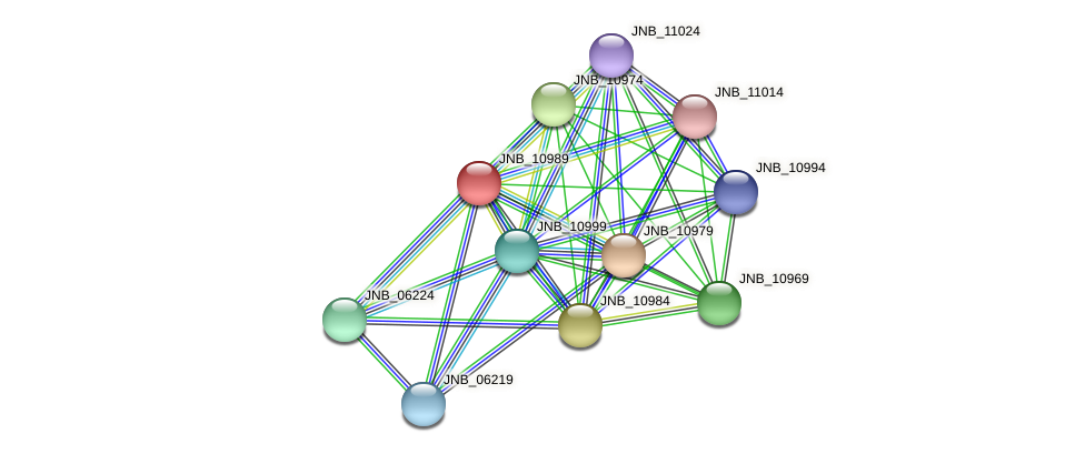 JNB_10989 protein (Janibacter sp. HTCC2649) - STRING interaction network