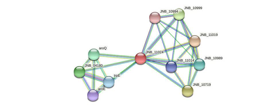 JNB_11024 protein (Janibacter sp. HTCC2649) - STRING interaction network