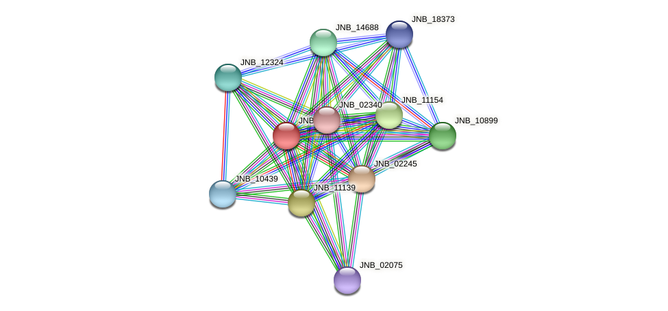 JNB_11144 protein (Janibacter sp. HTCC2649) - STRING interaction network