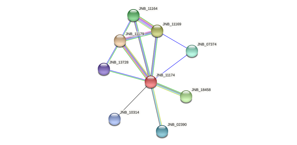 JNB_11174 protein (Janibacter sp. HTCC2649) - STRING interaction network