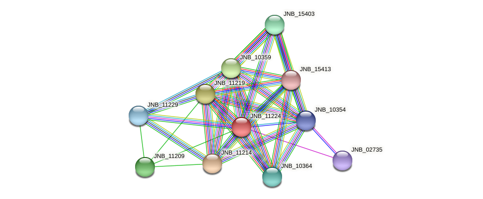 JNB_11224 protein (Janibacter sp. HTCC2649) - STRING interaction network