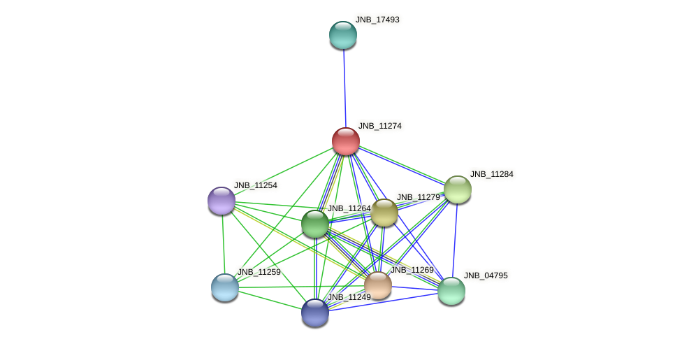 JNB_11274 protein (Janibacter sp. HTCC2649) - STRING interaction network
