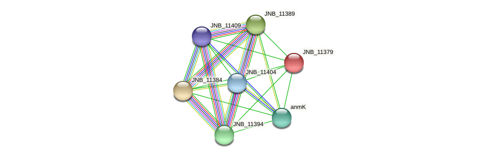 JNB_11379 protein (Janibacter sp. HTCC2649) - STRING interaction network