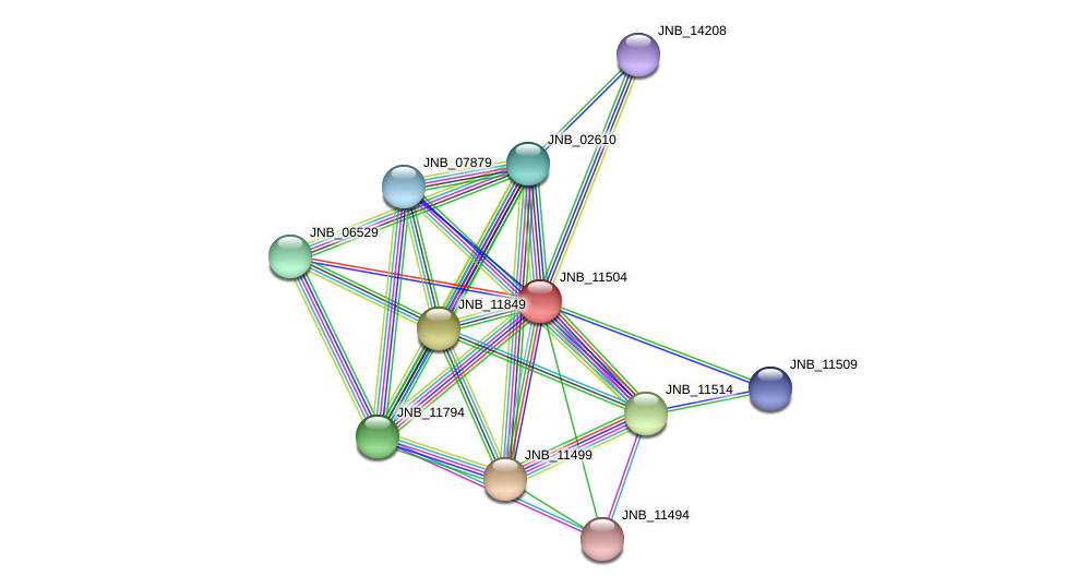 JNB_11504 protein (Janibacter sp. HTCC2649) - STRING interaction network