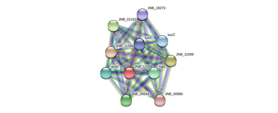 JNB_11589 protein (Janibacter sp. HTCC2649) - STRING interaction network