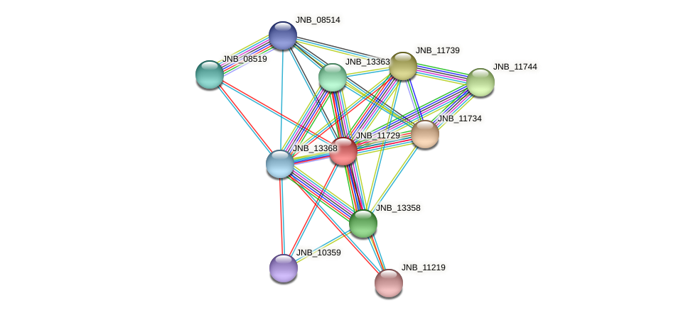 JNB_11729 protein (Janibacter sp. HTCC2649) - STRING interaction network