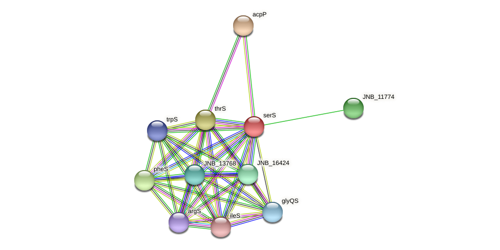 serS protein (Janibacter sp. HTCC2649) - STRING interaction network