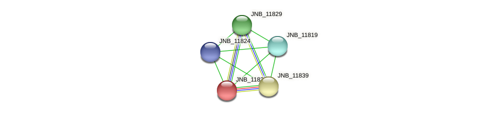 JNB_11834 protein (Janibacter sp. HTCC2649) - STRING interaction network