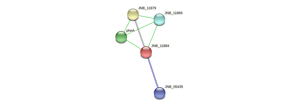 JNB_11884 protein (Janibacter sp. HTCC2649) - STRING interaction network