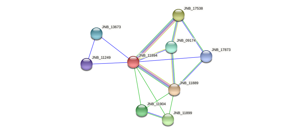 JNB_11894 protein (Janibacter sp. HTCC2649) - STRING interaction network