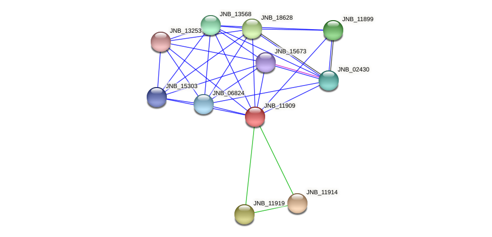 JNB_11909 protein (Janibacter sp. HTCC2649) - STRING interaction network