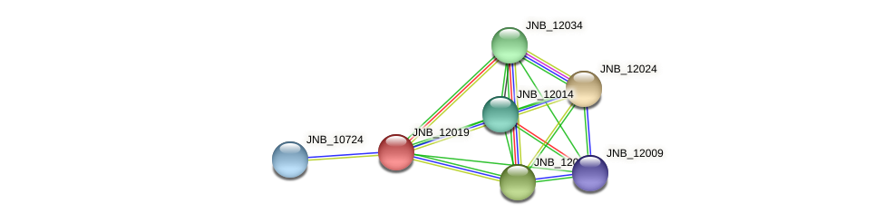 JNB_12019 protein (Janibacter sp. HTCC2649) - STRING interaction network