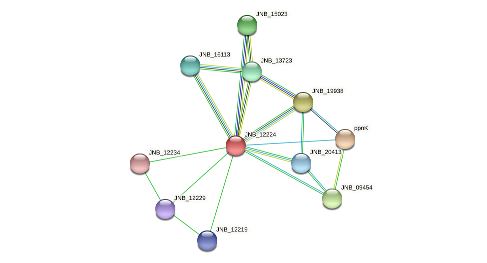 JNB_12224 protein (Janibacter sp. HTCC2649) - STRING interaction network
