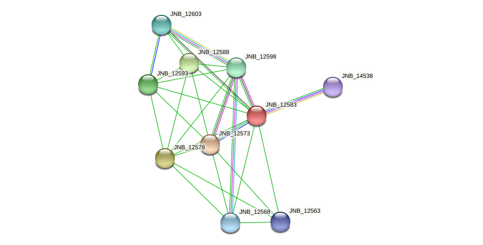JNB_12583 protein (Janibacter sp. HTCC2649) - STRING interaction network