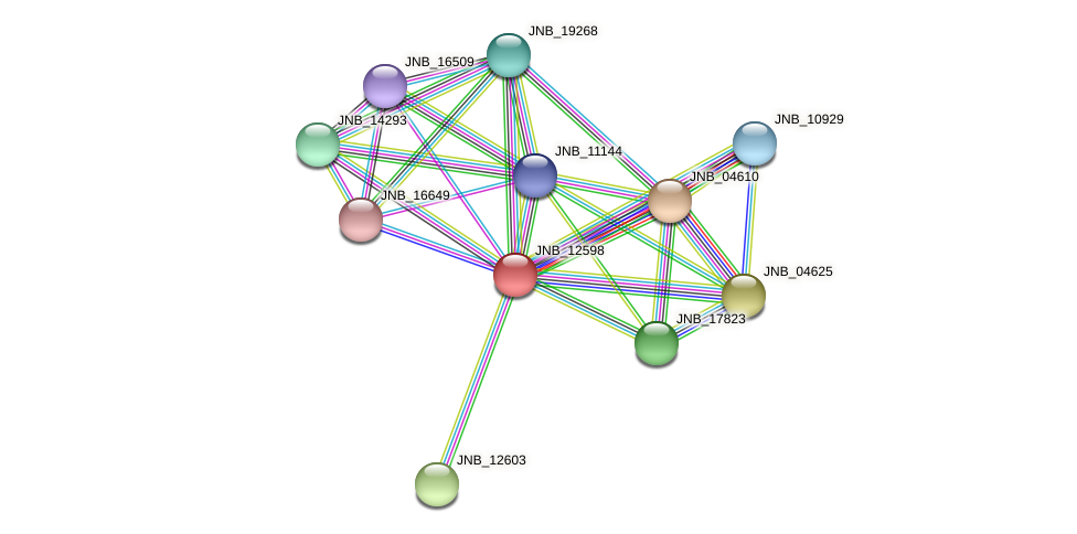 JNB_12598 protein (Janibacter sp. HTCC2649) - STRING interaction network