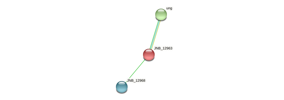 JNB_12963 protein (Janibacter sp. HTCC2649) - STRING interaction network