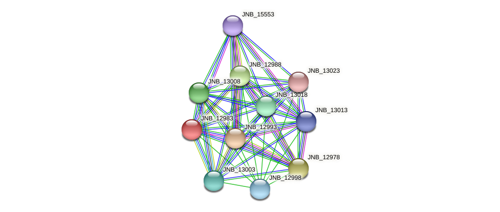 JNB_12983 protein (Janibacter sp. HTCC2649) - STRING interaction network
